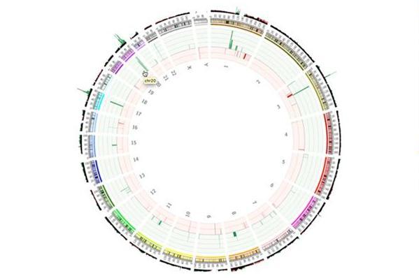 circos-plot-CNV-genome