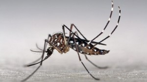 What doctors say about Zika virus