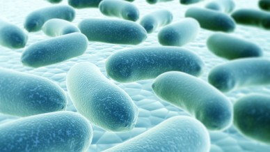 Drugs could mimic gut bacteria benefits to treat diabetes