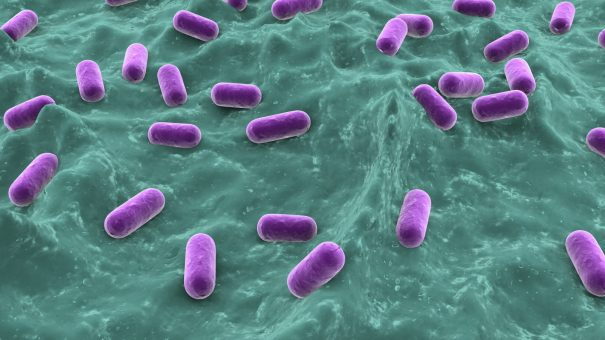 UK and Russian experts tackle superbugs