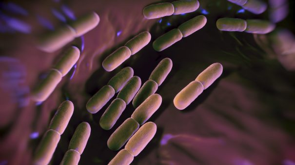FDA accepts Merck & Co's two new antibacterial drug applications