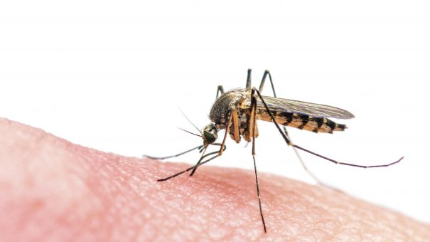 Takeda to develop Zika vaccine