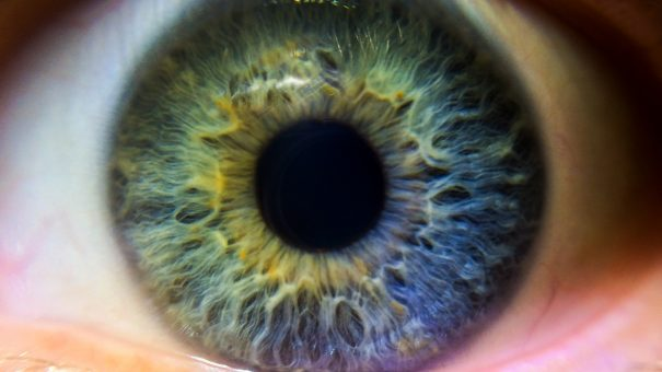 Cell therapy produces encouraging first results in eye trial