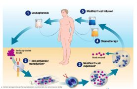 Oxford BioMedica are working with Novartis to produce the 'living drug' CAR-T therapy Illustration: Novartis