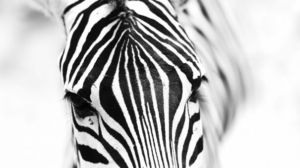 Horses or zebras: inspiring behavioural change to make the rare recognised