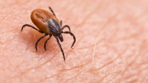 Valneva accelerates Lyme disease vaccine R&D project with Pfizer