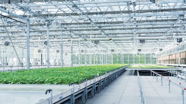 Medicago, GSK's plant-made COVID jab clears phase 2