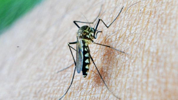 GSK's malaria vaccine gets WHO okay for mass rollout